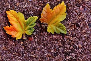 autumn-1593235_960_720.jpg