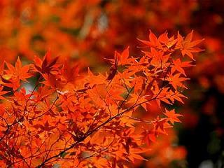 c.autumn-leaves.jpg