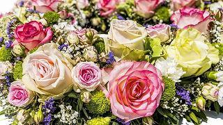 flowers-3441662__340.jpg