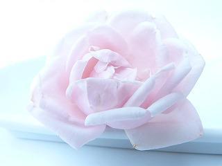 rose-91075_640.jpg