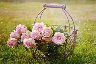 roses-1566792__340.jpg