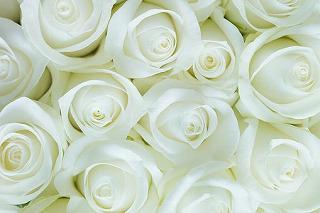 roses-2746116__340.jpg
